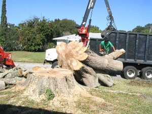 Tree Removal Services Austin